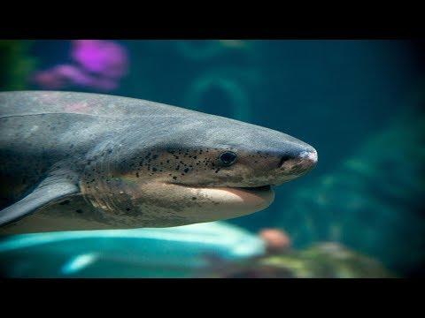 Live Shark Cam – Monterey Bay Aquarium