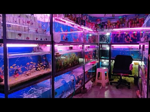 Pari Aquarium Fish Shop Kurla Fish Market
