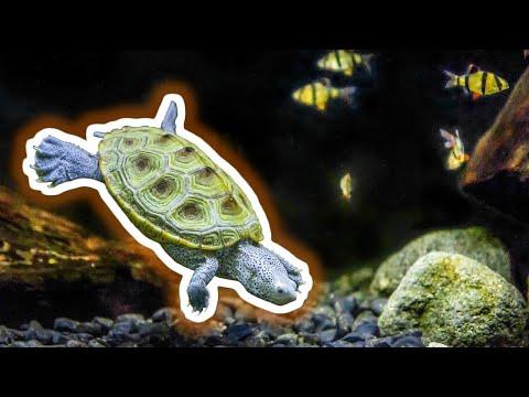 5 Best Aquatic Pets That Aren't Aquarium Fish [Live Stream]