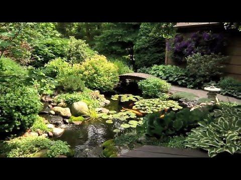 Amazing Backyard Pond & Watergardens