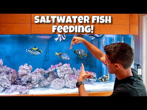 Feeding EXOTIC Aquarium Fish LIVE SHRIMP!!