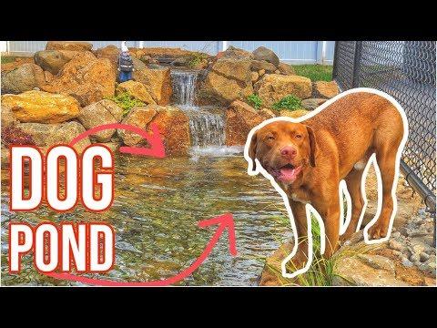 Driveway WATER GARDEN | Dog Pond