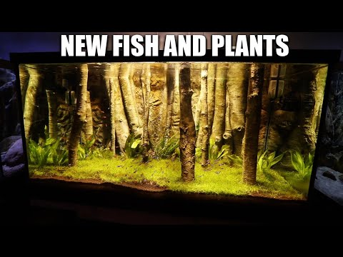 NEW FISH AND PLANTS FOR THE PLANTED AQUARIUM!! The king of DIY