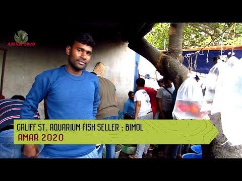 CHEAPEST AQUARIUM FISH SELLER OF GALIFF STREET PET MARKET KOLKATA | 19TH JANUARY 2020 VISIT