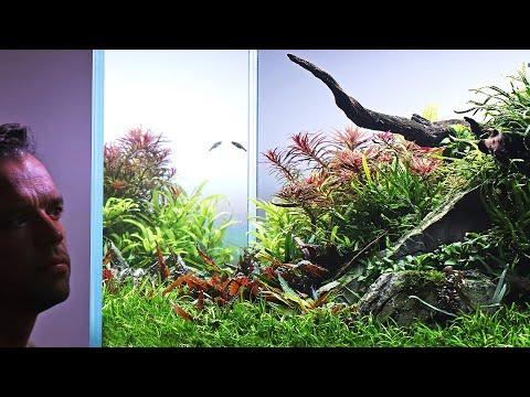 Aquascaping in 2020 – World Book Tour, Reef Aquarium and More!
