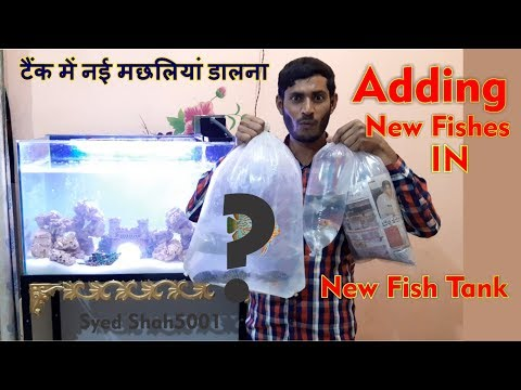 ADDING NEW FISH IN MY 3 FEET AQUARIUM – adding Cichlids