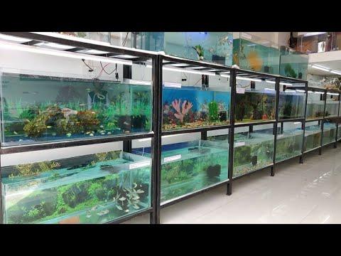 Hooked on Fishes Aquarium Fish Shop