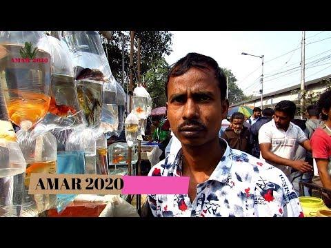 AQUARIUM FISH PRICE AT GALIFF STREET PET MARKET KOLKATA INDIA | 19TH JANUARY 2020 VISIT