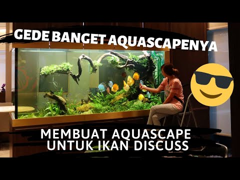 Membuat Aquascape Untuk Ikan Discuss, Gede Banget Aquascapenya Buatnya Aja Dari Dalem