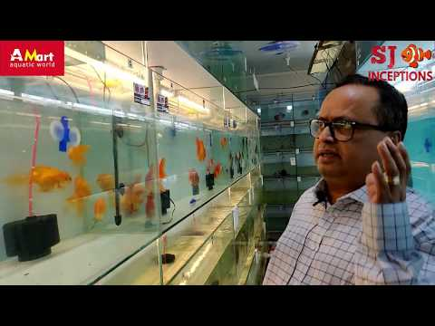 Interview with The Owner of India's Largest Aquarium Fish Store
