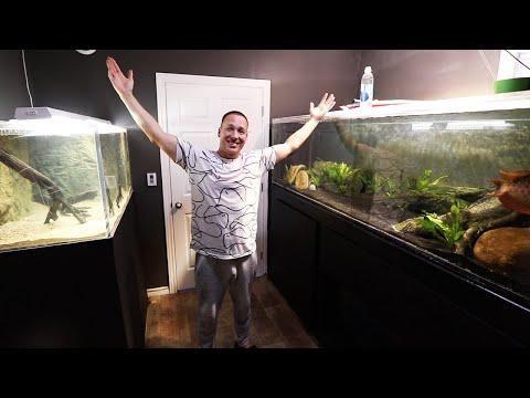 FISH ROOM REVEAL! The king of DIY aquarium gallery