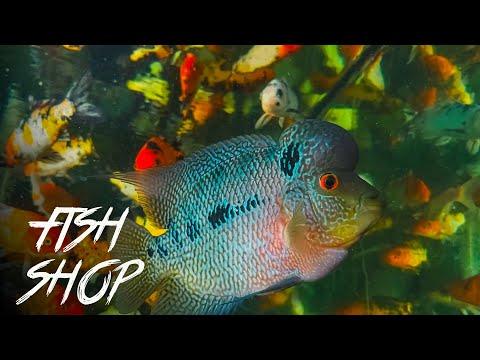 Aquarium Fish Shop   Shop Review