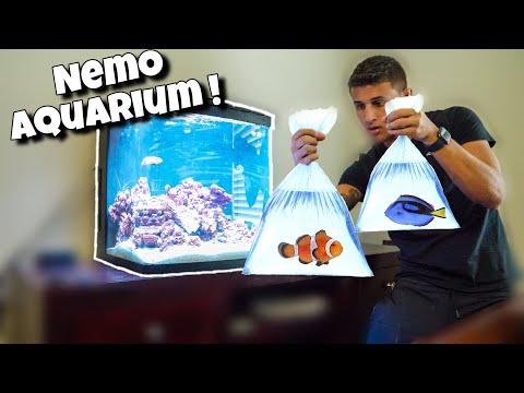 NEMO Themed Aquarium With NEW Fish!!