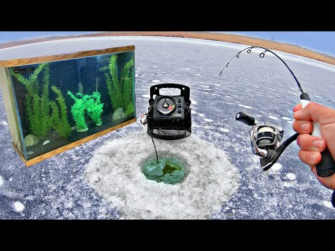 Pond Ice Fishing for NEW Pet Fish!!! (5 NEW SPECIES!)