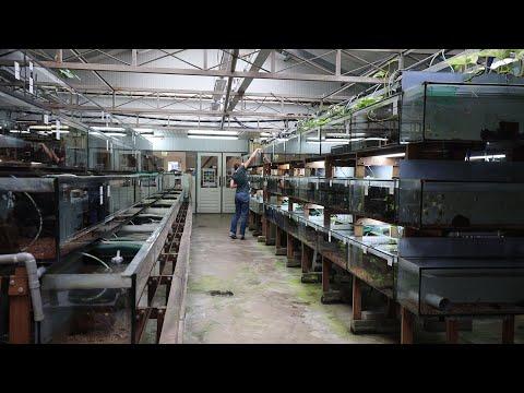 Aquarium Fish Store! Netherlands!