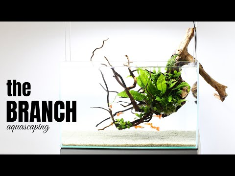 Aquascaping THE BRANCH