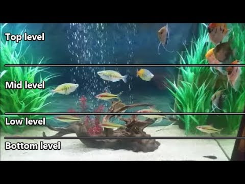 Selecting aquarium fish according to water levels of the tank. stocking a fish tank evenly