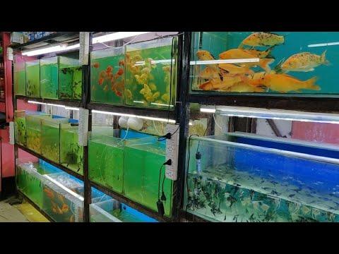 Naaz Aquarium Fish Shop