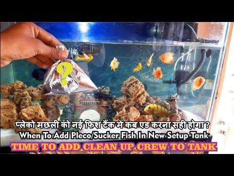 Now it's time to add in Aquarium ! Adding sucker fish in Aquarium