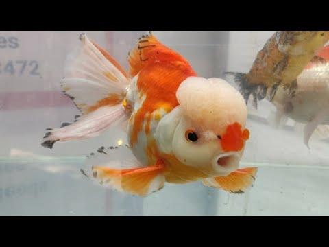 Aquarium Fish Exhibition by AMart