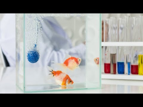 Aquarium Fish Medications: What You Need to Know [Live Stream]