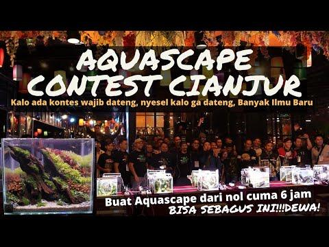 """Kontes Aquascape di Cianjur Puncak """"ROOF PARK"""" 2020.  Inspirasi Desain Aquascape Aquarium Kecil"""