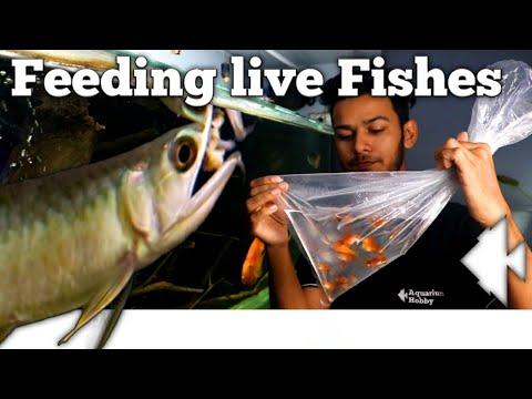 Live feeding