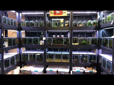 Friday Night Live Q&A Freshwater Aquarium Keeping Fish Shrimp