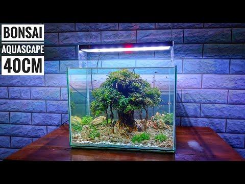#161 Membuat bonsai mini untuk Aquascape model beringin