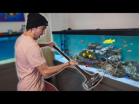 GUY SMASHES REAL FISH AQUARIUM!