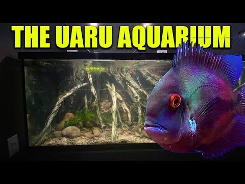 The cichlid aquarium – The king of DIY