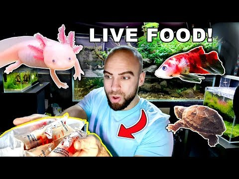 FEEDING *LIVE* FOOD to EXOTIC ANIMALS & FISH | MD FISH TANKS