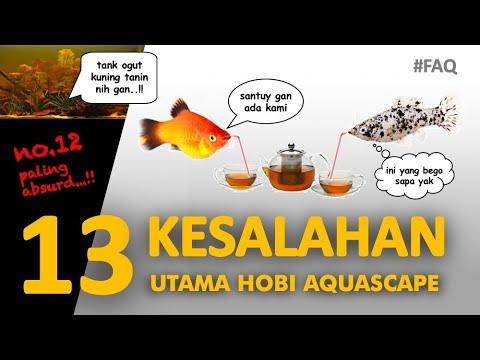 13 KESALAHAN UTAMA – Penghobi Baru Aquascape