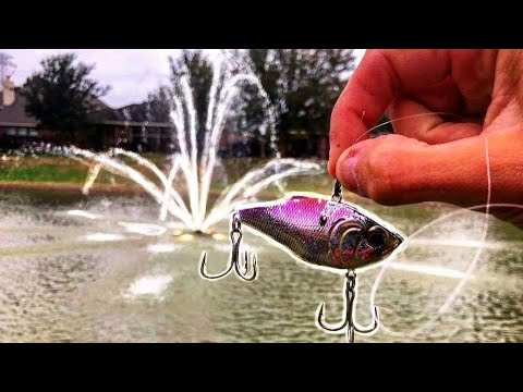 CRAZY MYSTERY FISH IN FOUNTAIN POND!!!