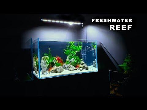 MAKING A *FRESHWATER REEF* AQUARIUM || STEP BY STEP || MD FISH TANKS
