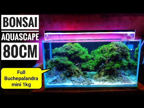 #159 Membuat 2 bonsai Aquascape ukuran 80cm