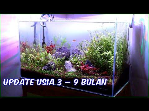 Update Aquascape 60cm Usia 3-9 bulan
