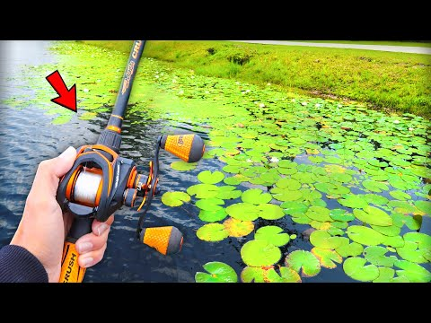 GIANT Bass are LOADED in this SMALL Pond (Bank Fishing)