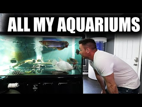 EVERY AQUARIUM AND FISH