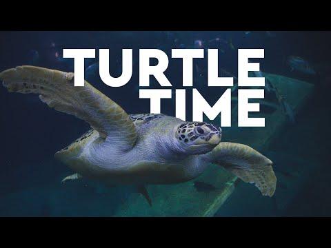 Aquarium Live – Turtle Time (May 2020)
