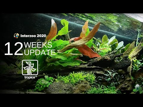 Tropica Limited Edition Aquascape – NEW PLANTS ADDED