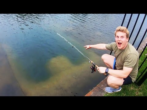 We FOUND GIANT FISH in CITY POND!!!
