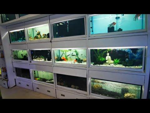 Aquarium Lights at Blessings Aquarium Fish Shop