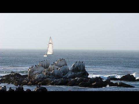 Live Monterey Bay Cam – Monterey Bay Aquarium