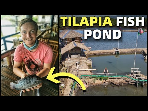PHILIPPINES FISH POND BUSINESS – British Man Grows Tilapia By River (Davao, Mindanao)