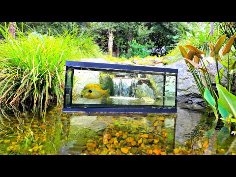 Inverted Aquarium in Backyard Pond! (Upside Down Fish Tank)