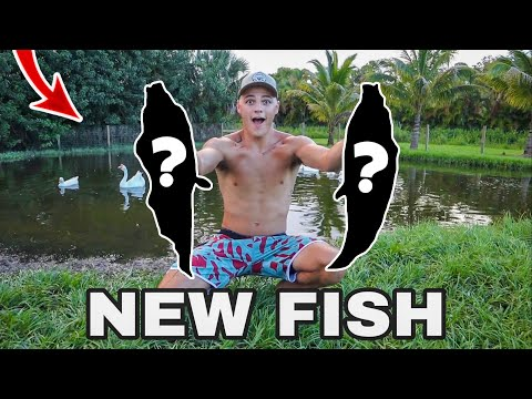 CATCHING MYSTERY INVASIVE FISH for My BACKYARD POND!?!