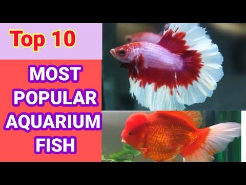 Most PopularTop 10  Aquarium Fish