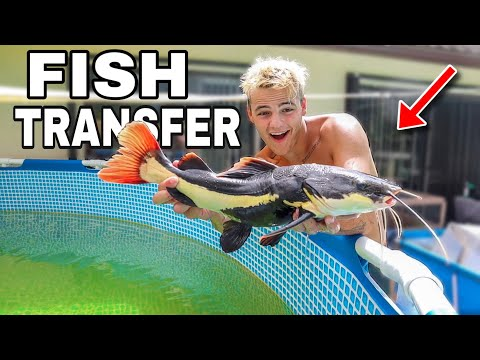 TRANSFERRING ALL My MONSTER FISH to NEW POND!!!