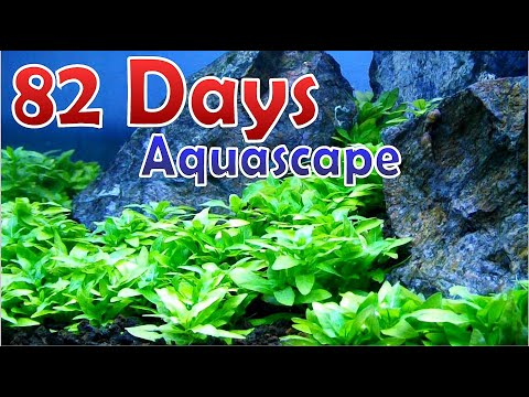 MAKING SIMPLE AQUASCAPE – Step By Step Tutorial